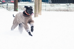 Dan in the snow