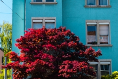 Urban Colours