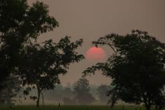 Sunrise in the Rice Fields